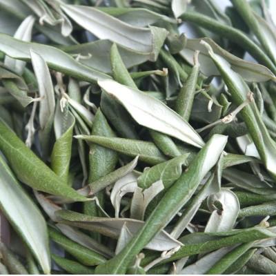 Olive Loose Leaf