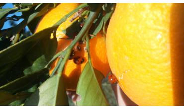 Il vero frutto Biologico
